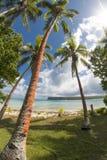 在热带白色沙子海滩的可可椰子树 免版税库存照片