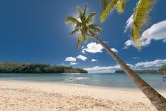 在热带白色沙子海滩的可可椰子树 免版税库存图片