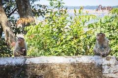 在热带的猴子家庭 免版税图库摄影