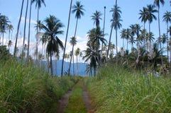在热带的石渣路 免版税库存图片