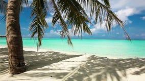 在热带盐水湖的棕榈树有白色海滩的 股票视频