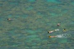 在热带礁石浅的snorkelers的海湾珊瑚 库存照片