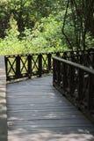在热带美洲红树森林里面的木桥 免版税库存照片