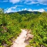 在热带自然的Foothpath 库存照片