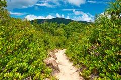 在热带自然的Foothpath 图库摄影