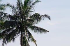 在热带设置的孤立棕榈树在与新鲜通风的海滩 图库摄影