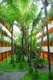在热带里面的庭院 库存图片