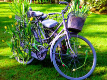 在热带陈列温室里面的自行车 免版税库存照片