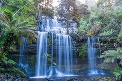 在热带雨林塔斯马尼亚岛的瀑布 免版税库存照片