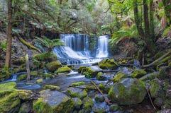 在热带雨林塔斯马尼亚岛的瀑布 免版税库存图片