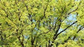 在热带雨林概念移动式摄影车射击的树 股票录像