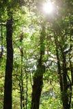 在热带雨林的美好的光束在Kew Mae平底锅, Chaing Mai,泰国 库存照片