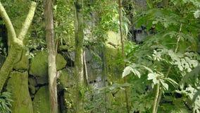在热带雨林落的和自来水在岩石,下落落入水的和石头的热带瀑布 股票录像