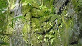在热带雨林落的和自来水在岩石,下落落入水的和石头的热带瀑布 影视素材