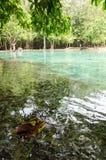 在热带水的叶子 库存照片