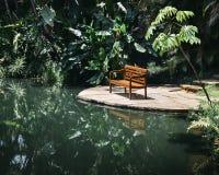 在热带florest的长凳 免版税库存图片