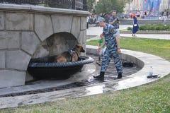 在热期间,警犬在城市喷泉沐浴 免版税库存图片