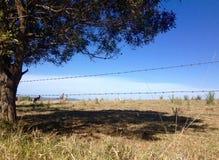 在热的夏天天旱期间的干燥炎热的澳大利亚农田 免版税库存照片