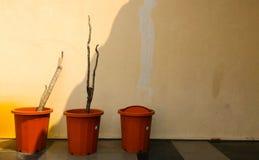 在热的太阳下的干植物 免版税库存图片