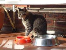 在热的瓦片门廊的猫 免版税库存图片