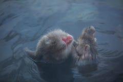 在热水的雪猴子在纳卡语的Jigokudani Onsen 免版税库存图片