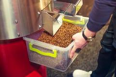在焙烧过程以后的咖啡豆在专业机器 鼓形烘烤器 咖啡的Rosting过程 得到咖啡的Barista 免版税库存图片