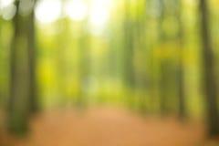 在焦点外面的森林 免版税库存照片
