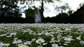 在焦点外面的雏菊风景 库存照片