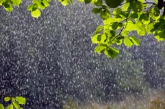 在焦点雨外面下落由太阳突出了在与在前景聚焦的绿色叶子的一个夏日 库存图片