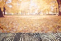 在焦点,自然bokeh背景外面的秋天树 免版税图库摄影