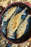 在煎锅油煎的河鱼 免版税库存图片