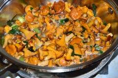 在煎锅的黄蘑菇蘑菇 图库摄影