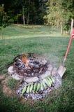 在煤炭的烧烤玉米 库存图片