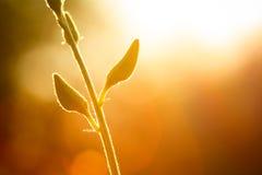 在照明设备的芽花 免版税库存照片