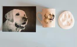 在照片、杯子和他的爪子踪影的一条狗拉布拉多  免版税库存图片