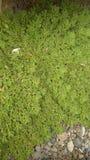 在照片的自然老绿色 库存图片