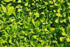 在照片的绿色叶子 免版税库存图片