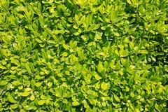 在照片的绿色叶子 库存图片