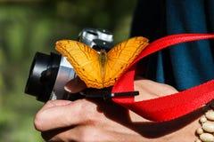 在照相机的橙色蝴蝶在KuangSi蝴蝶公园 老挝luang prabang 图库摄影