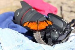 在照相机的蝴蝶 库存照片