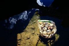 在煮沸在温泉的帆布篮的鹌鹑蛋 库存图片