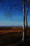 在熊湖边的树 免版税库存照片