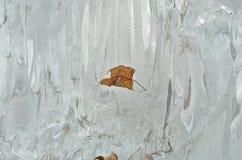 在熔化的冰10的叶子 免版税库存图片
