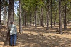 在熔岩小山俄勒冈附近的树森林 库存照片