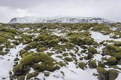 在熔岩荒野的美丽的软的青苔与mountainscape在背景中 库存照片