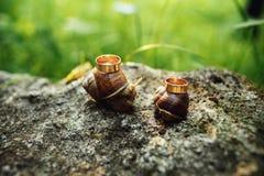 在爬行在灰色岩石的蜗牛的婚戒 免版税库存图片
