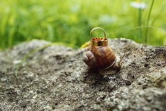 在爬行在粗砺的灰色石头的蜗牛的婚戒在庭院里 库存照片
