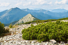 在爬行杉木中的石领域 库存图片