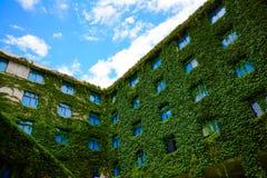 在爬行物窒息的旅馆窗口(绿色叶子灌木) 库存照片