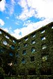 在爬行物窒息的旅馆窗口(绿色叶子灌木) 免版税库存照片